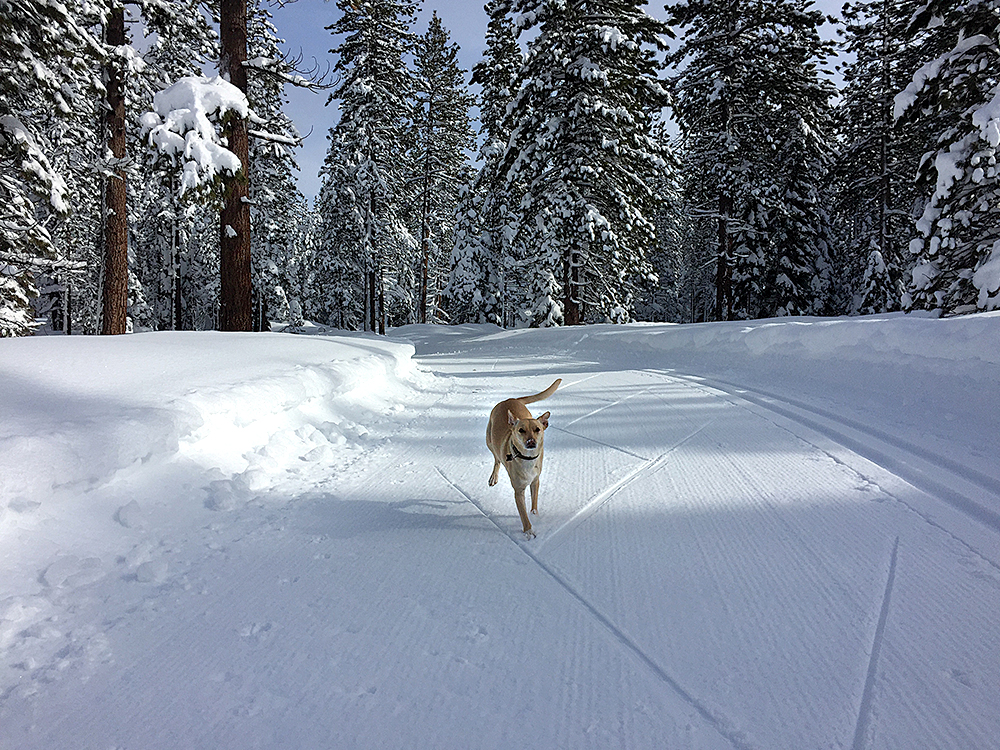 FUN WITH FIDO: Dogs are welcome on select trails at the Tahoe XC Nordic ski and snowshoe area. Photo courtesy Tahoe XC